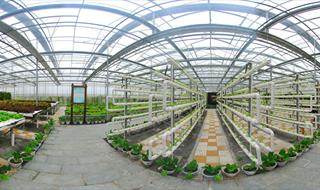 360tour Urban Vegetable Garden