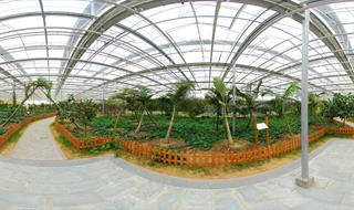 Panoramic Urban Vegetable Garden