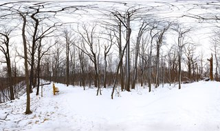 Oneil's Woods...Winter Day