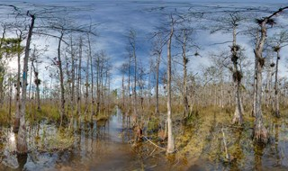 Florida Trail.....Big Cypress.....002