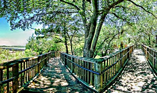 The Marsh Boardwalk at Huntington Beach State Park in South Carolina, USA