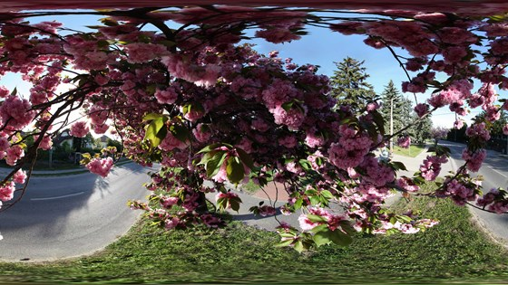 Virtual Landscaping Upload Picture : Cherry blossom natural landscape panoramic image