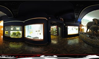 National Museum of Bloemfontein, Zoology view