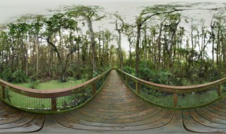 Loxahatchee Wildlife Refuge....boardwalk