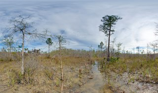 Florida Trail.....Big Cypress.....001