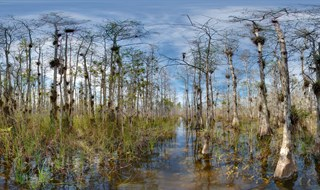 Florida Trail.....Big Cypress.....003